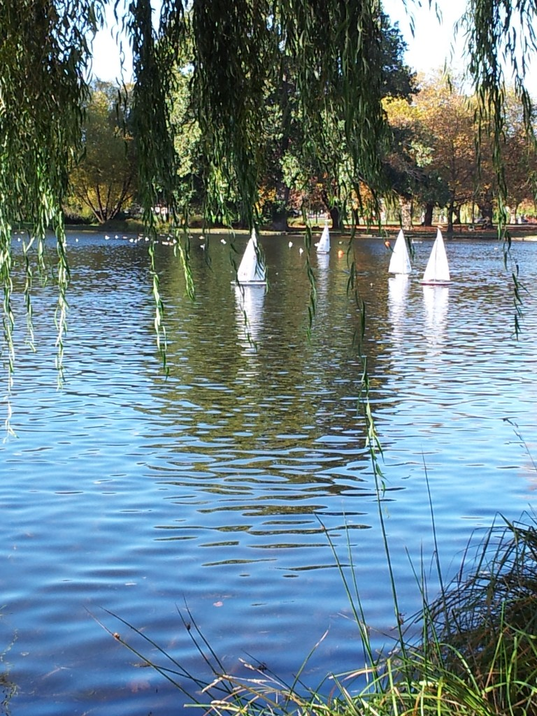 From my vantage point under a weeping willow, these few yachts appear to be racing to avoid the wooden spoon