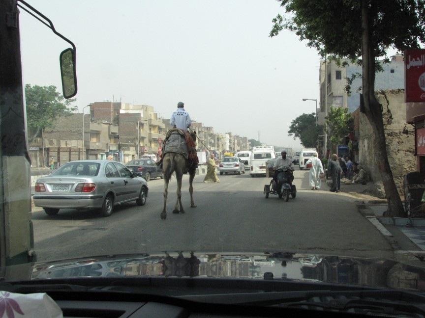 Ordinary life on a street in Cairo, where all manner of transport is used.
